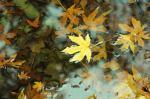 Autumn leaves by Aaron Villa